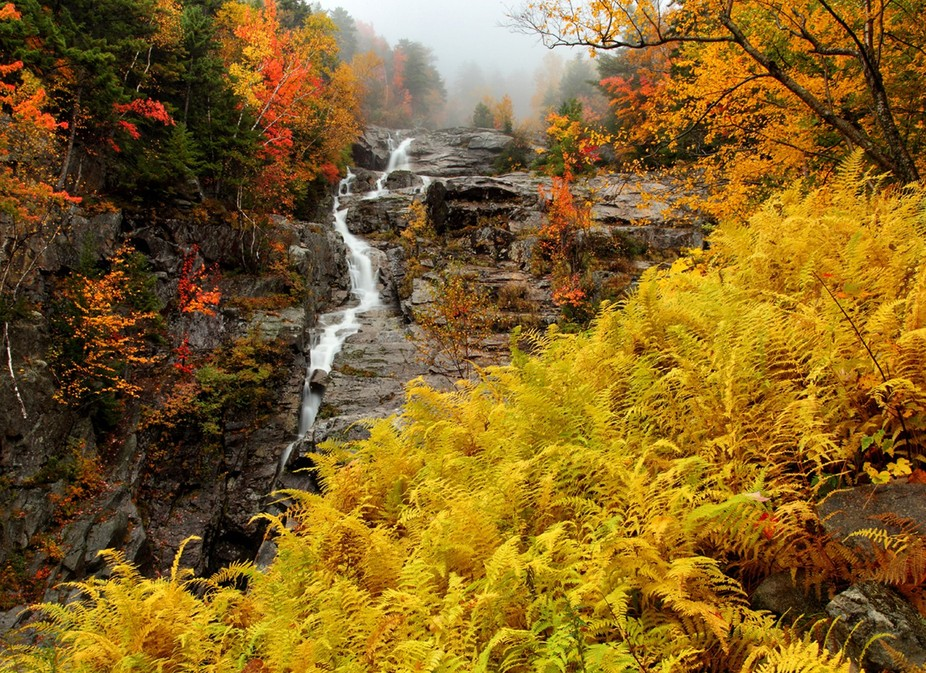Autumn Ferns at the Silver Cascade, Crawford Notch, New Hampshire