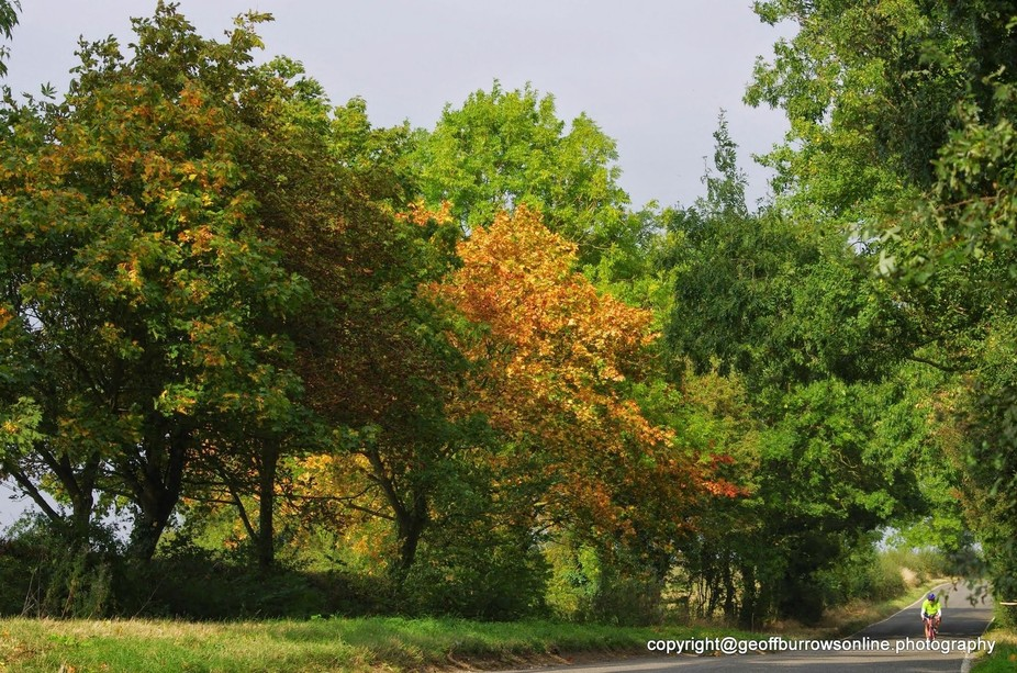 Shades of the leaves confirm the change of season