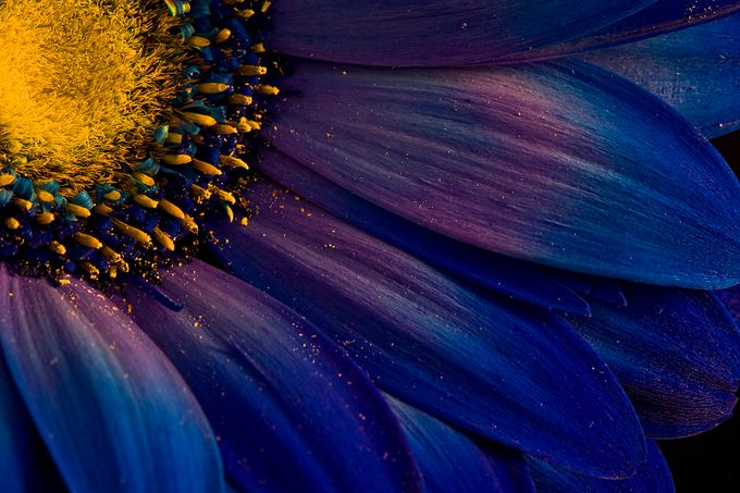 Blue Rays by Structor - Close Up Art Photo Contest
