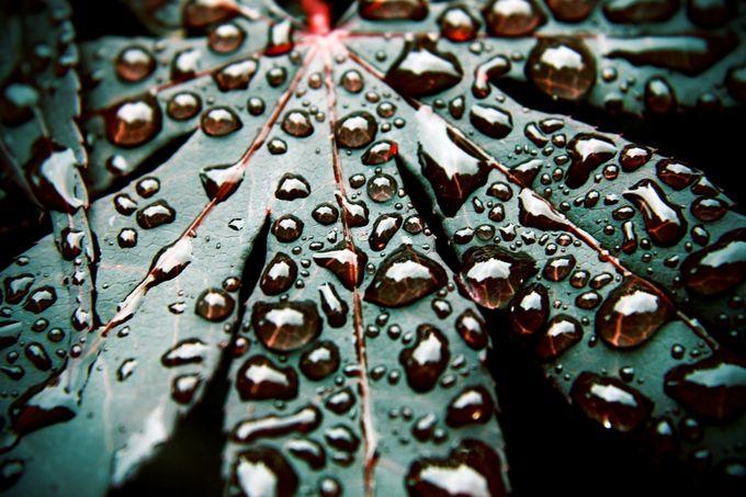 Dark Rain by justinconnor - Fstoppers Volume 5 Photo Contest