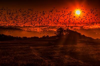 Flying into Dawn