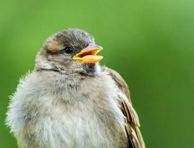 Central Park Bird
