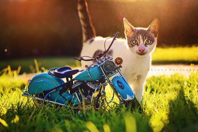 The Cat and the Indian by ElenaParaskeva - Motorcycles Photo Contest
