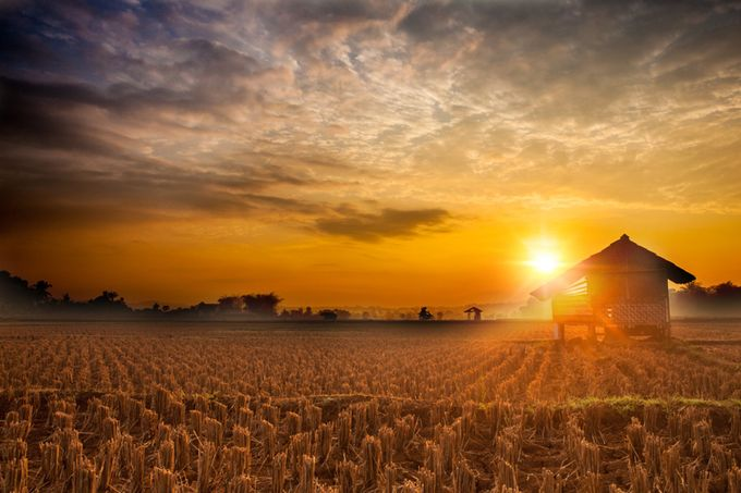 Field of Gold by W1SNU - Flares 101 Photo Contest