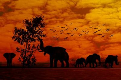 elephant's dinner jpeg
