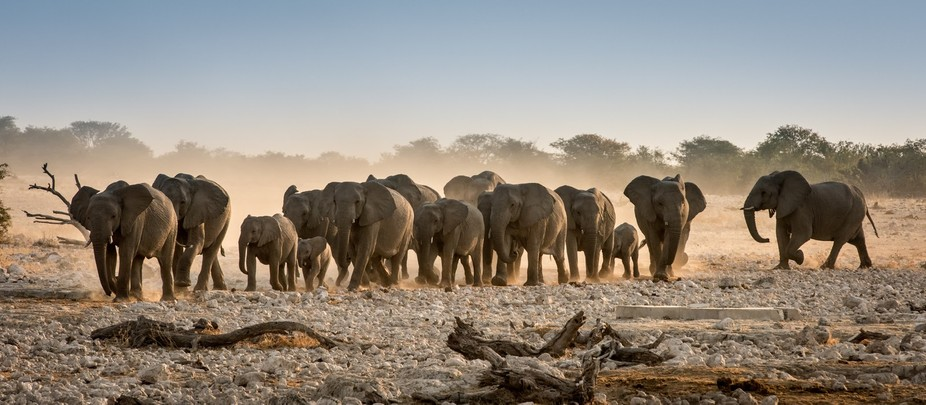 What an overwhelming experience watching this herd of charging of elephants appear out of a cloud...