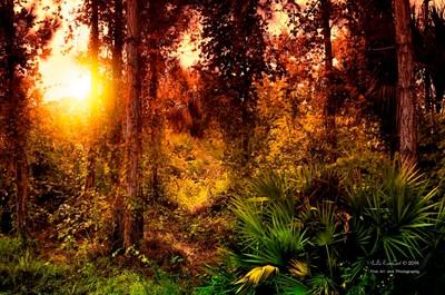 Sunny Florida Forest