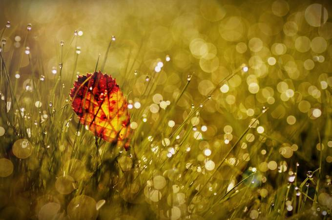 October by AgnieszkaD - Magical Light Photo Contest