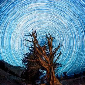 Star Trail at the Ancient Bristlecone Pine Forest in Califronia  This one picture is actually over 200 single 30 second exposures merged together...