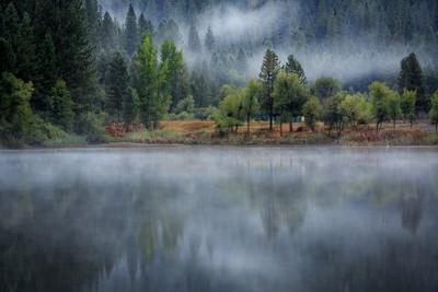 White Pines Misty Morn
