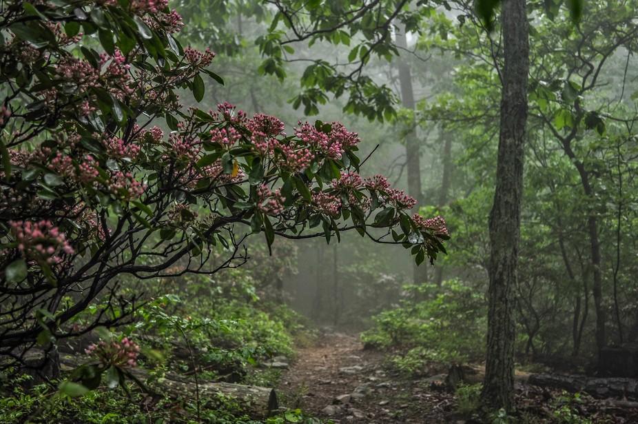 Roanoke Mountain, Va