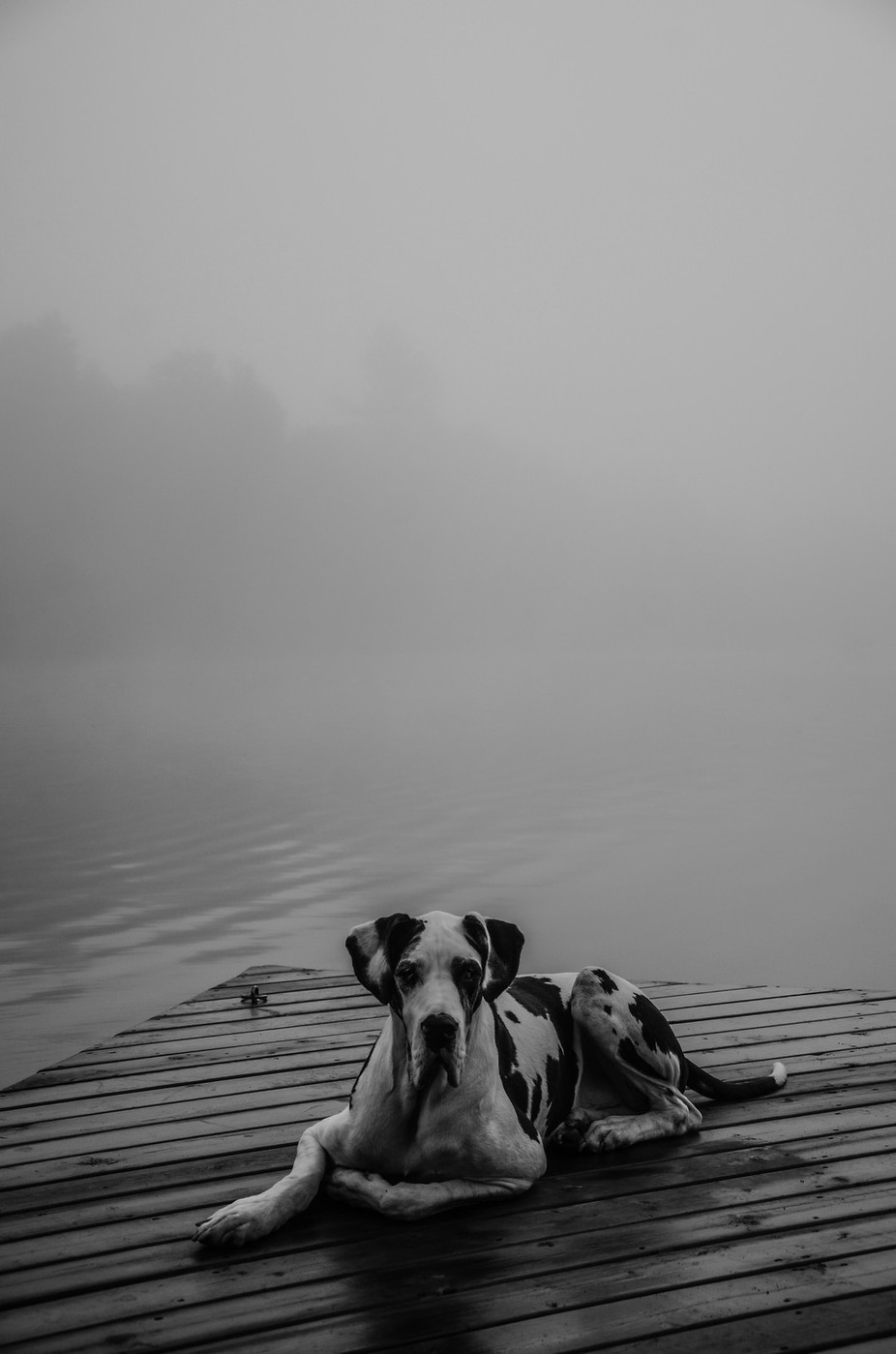 Attentive by Colour_Me_Christal - Mist And Drizzle Photo Contest