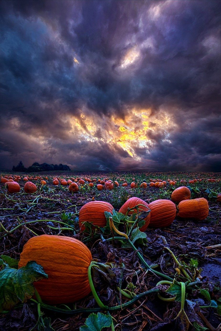 Halloween is Near by phil1 - Subjects On The Ground Photo Contest