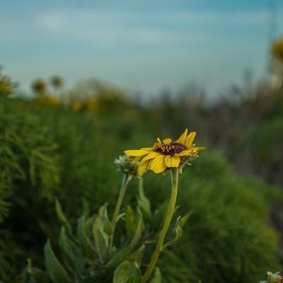 #flower #nature #spring #standout #LA #Malibu #Ca
