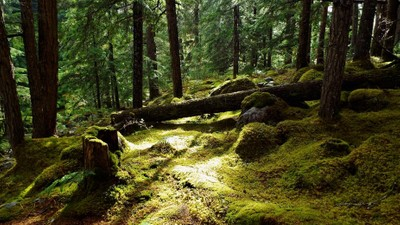 Nakusp Forest