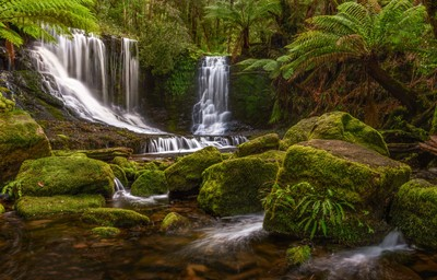 Ferns & Falls