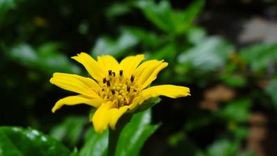 Flower Ready for Love