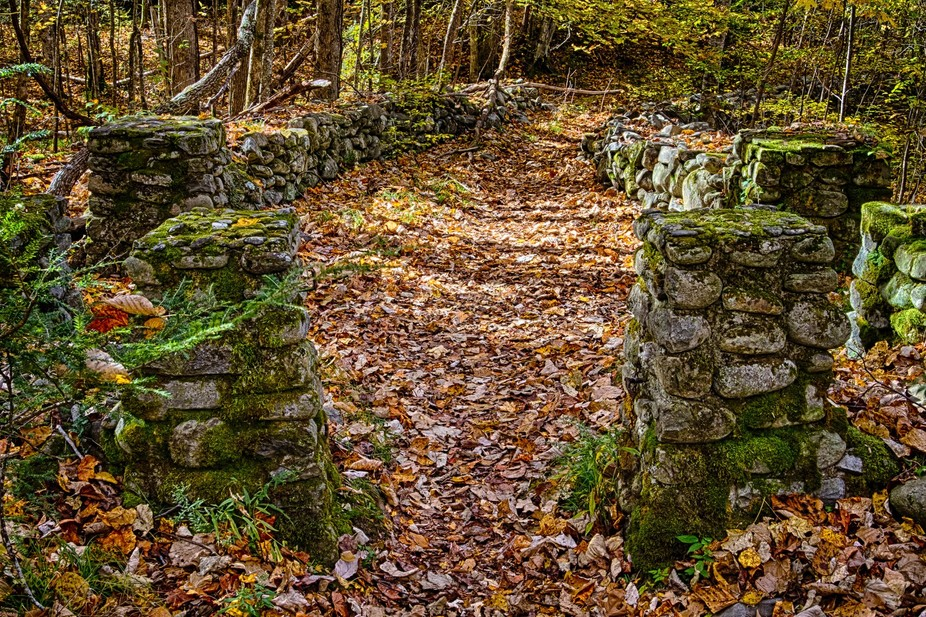 Path in the old Elkmount community in the Great Smoky Mountains.