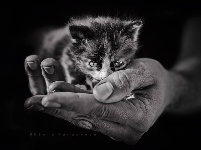 Lost by ElenaParaskeva - Kittens vs Puppies Photo Contest