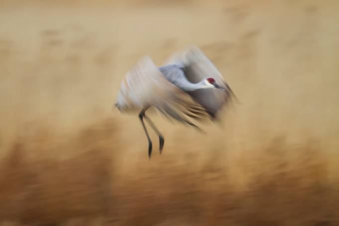 Catch me if you can by ruthjolly - Capture Motion Blur Photo Contest
