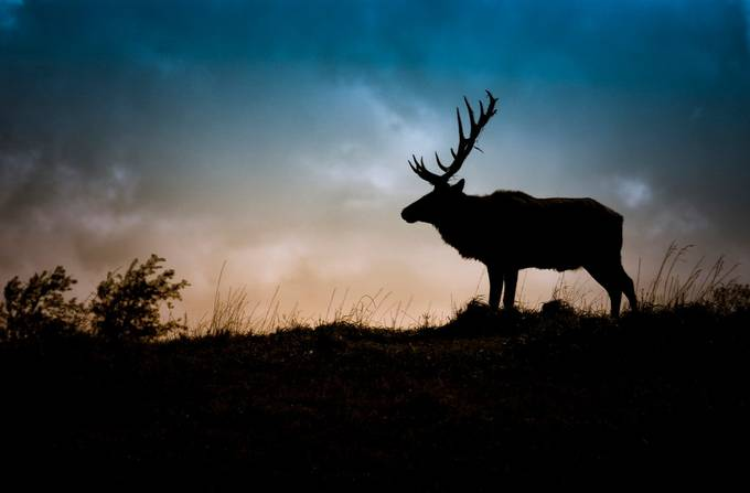 Silhouettes In Nature Photo Contest Winners