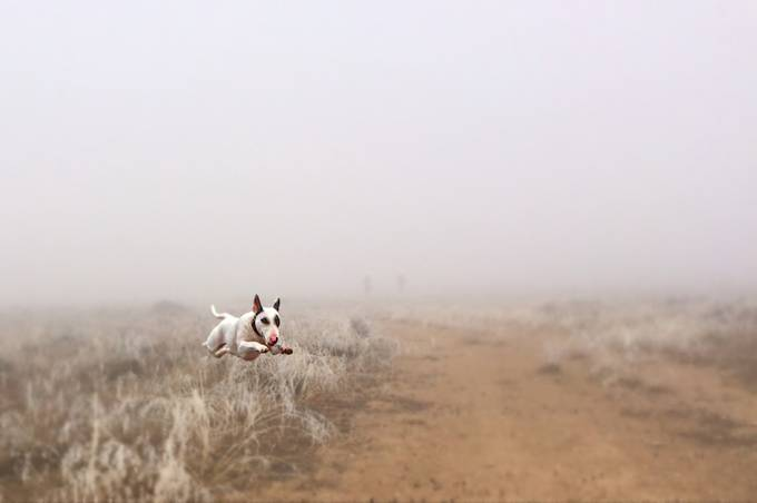 Aby in the fog by dawnvandoorn - Mist And Drizzle Photo Contest