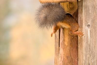 birdhouse stuck
