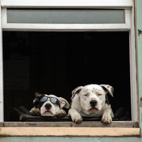 I captured this image of the kool dawgs as I was walking along a street in Ketchikan, Alaska. They seemed quite content and stayed in this positi...