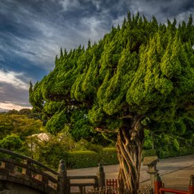 This fabulous tree was shot in Kamakura - Japan