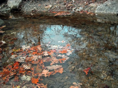 Creek-Arbor Hills