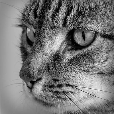 Neighbour cat
