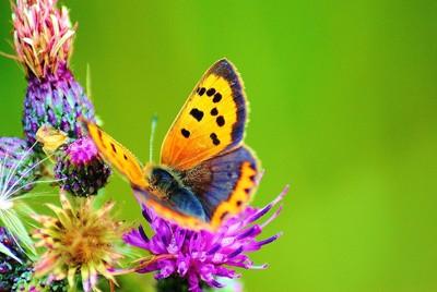 Butterfly 2010