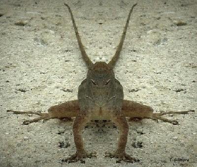 Demonic Gecko