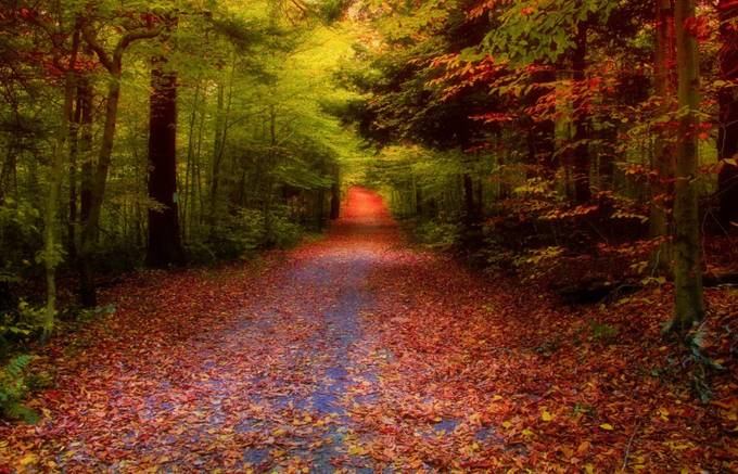 Glen Forest by GPictoria - Fall 2016 Photo Contest