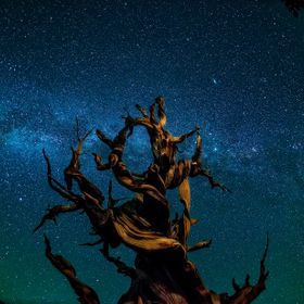 Sigma 15 fisheye shot as straight up as possible. Is that a distant galaxy just above right of the Bristlecone Pine?