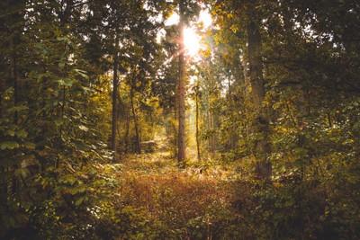 Magical Woods
