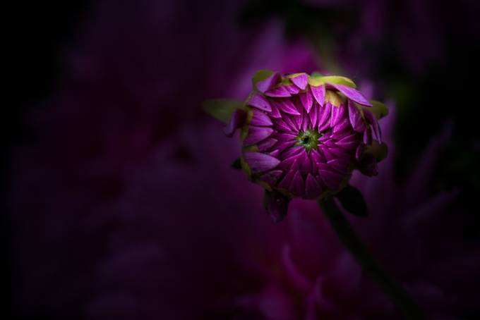 I Have My Eye On You by paulbarson - Shades Of Purple Project