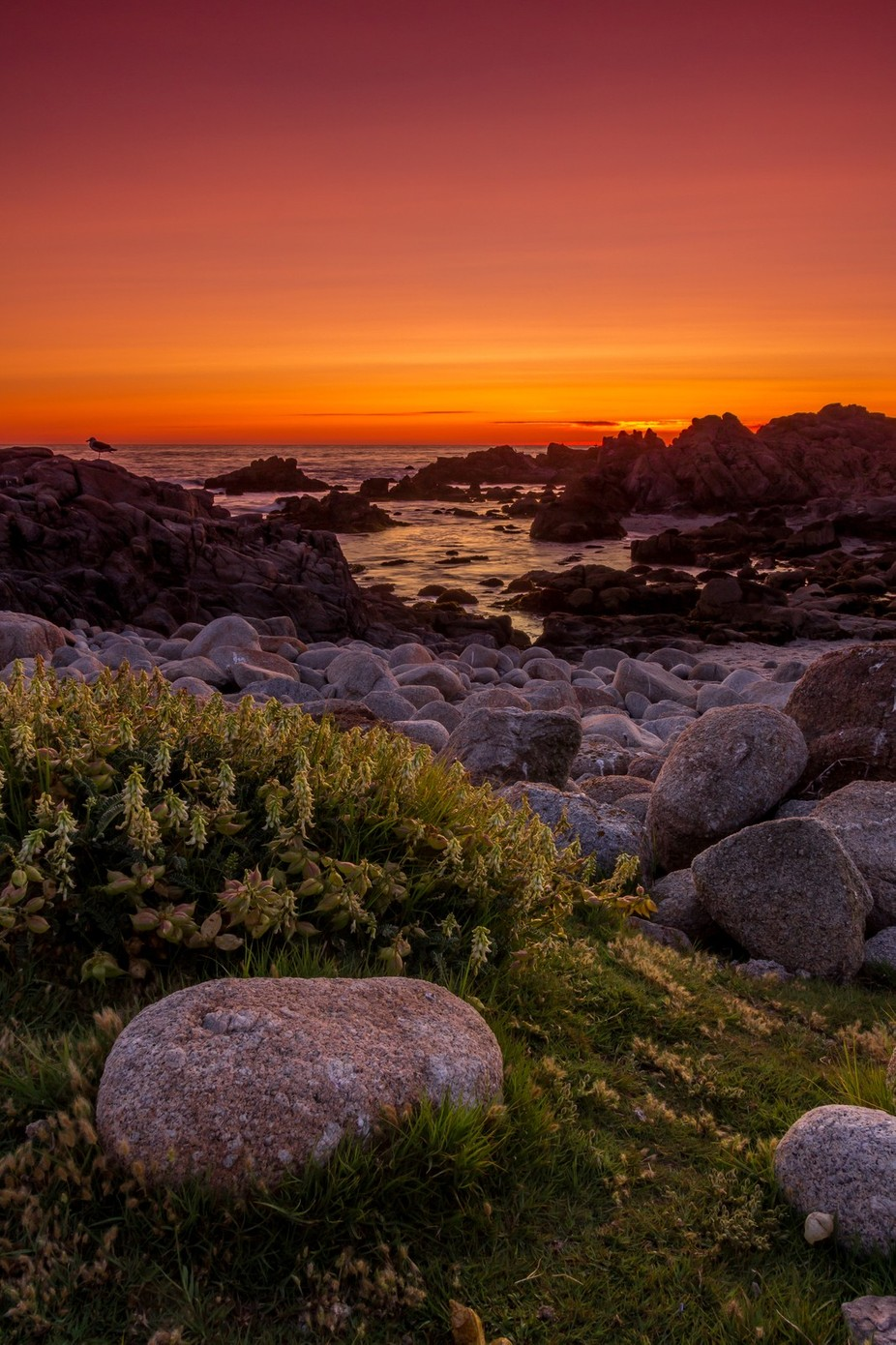 Monterey Sunset by jvcron - Orange Is The Color Photo Contest