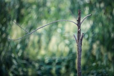 Leaf Stalk