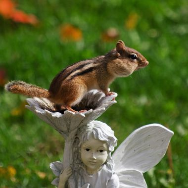 A chipmunk with its cheeks full of seeds sitting on a garden ornament.