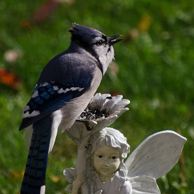 A blue jay eating seeds on a garden ornament.