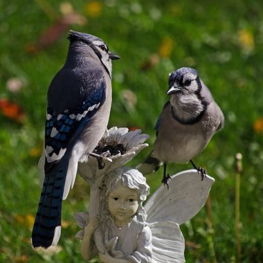 Two blue jays sitting on a garden ornament.