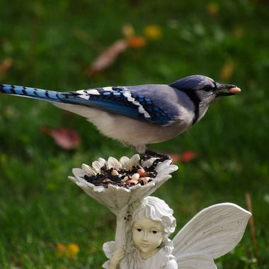 A blue jay on a garden ornament with a peanut in its beak.