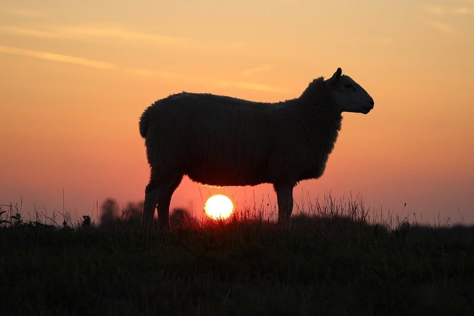 Sunset at Frampton Marsh