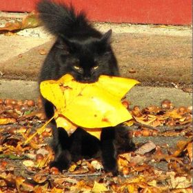 Still bringing me presents. He once surrounded my car with dozens of mouthfuls of leaves.