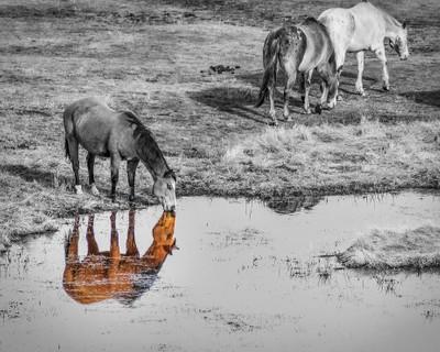 reflective kiss