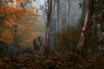 Bushland Fantasy - Mount Wilson NSW Australia