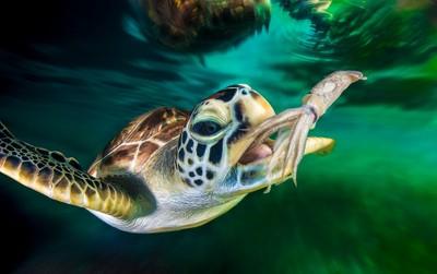Turtle Hunt
