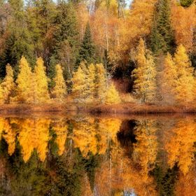 Fall colors at Mcgillvery Lake, Whiteshell Park, Manitoba