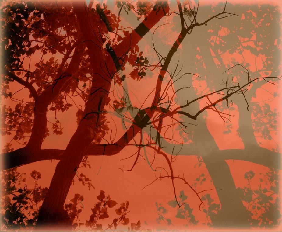 THE TREEES CELEBRATE FALL